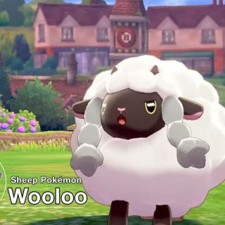 New pokemon revealed during live stream. Image shows Wooloo.