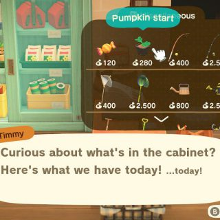 Featured image on guide to Pumpkins in Animal Crossing New Horizons.